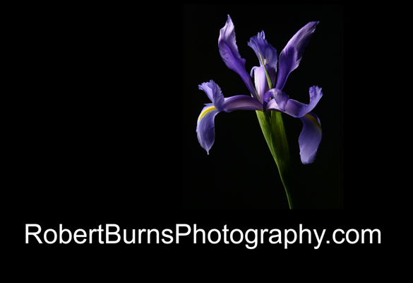 Welcome to robertburnsphotography.com